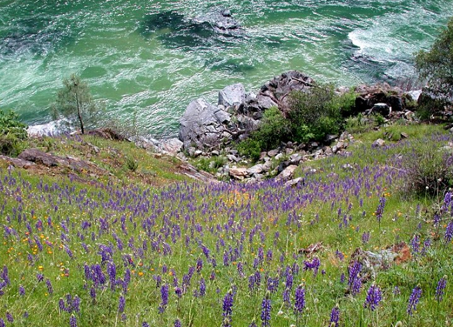 wildflower walk at south yuba river state park